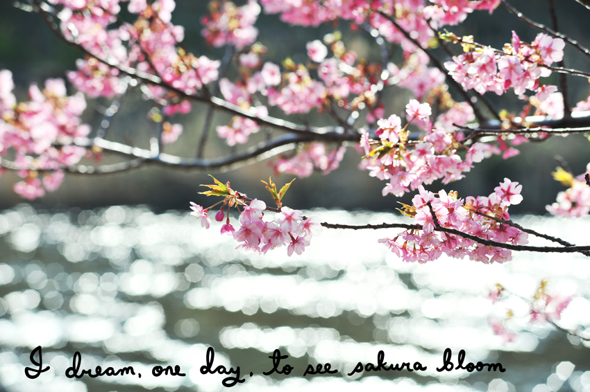 I dream, one day, to see sakura bloom