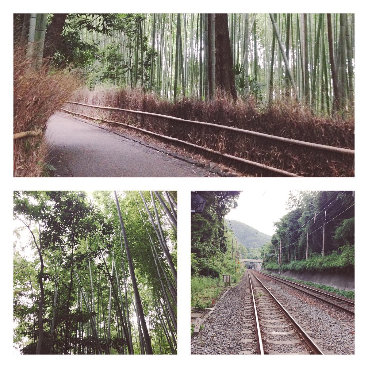 bambooforest_cb