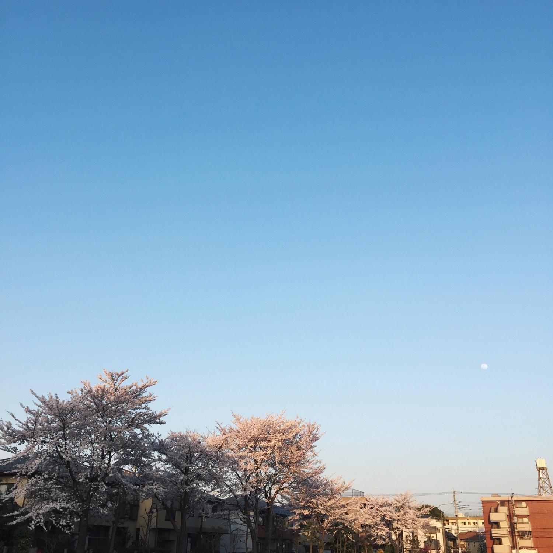 sakura-sky.jpg