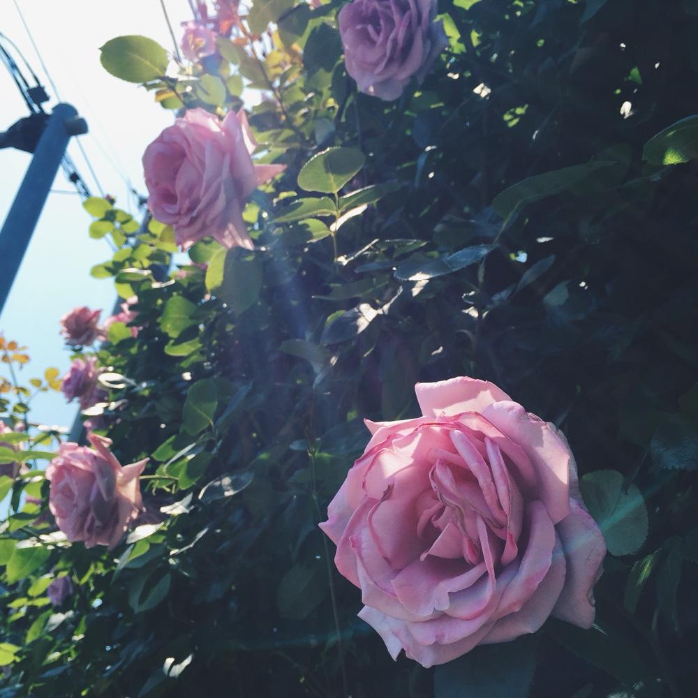 pretty-flowers.jpg