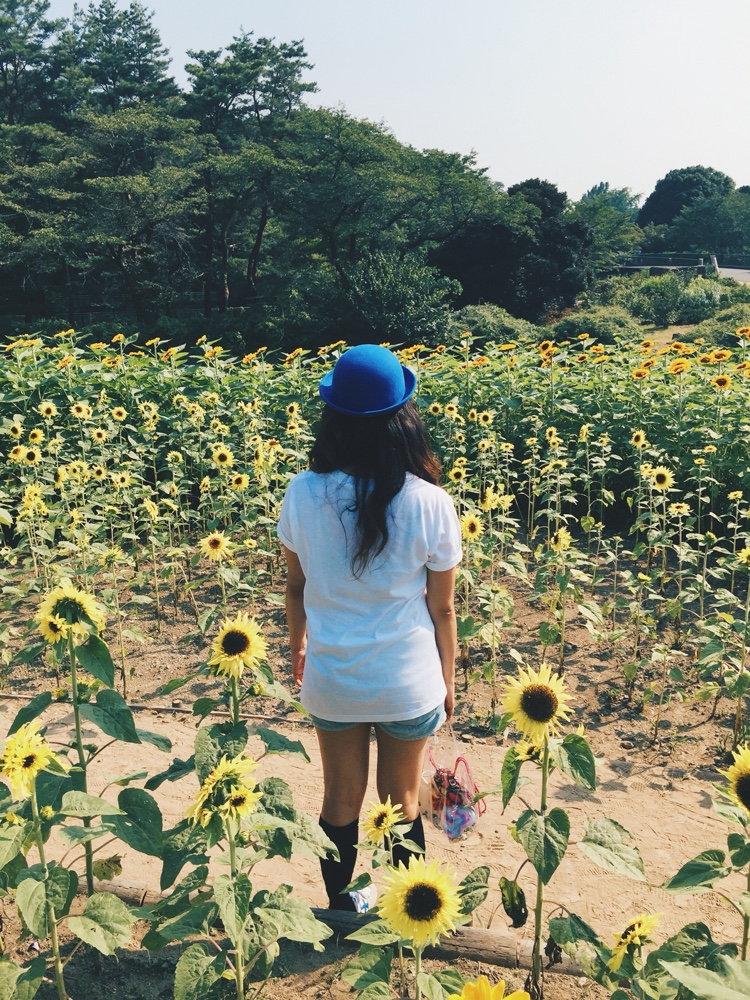 tachikawa-sunflower-biking.jpg