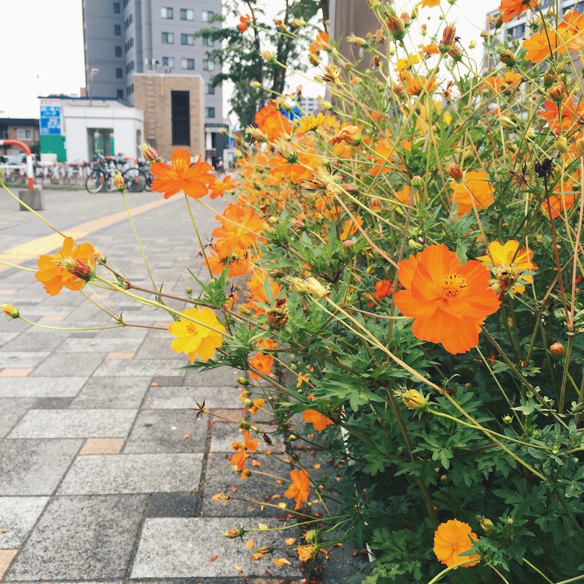 Rainbowholic Travels To Hokkaido