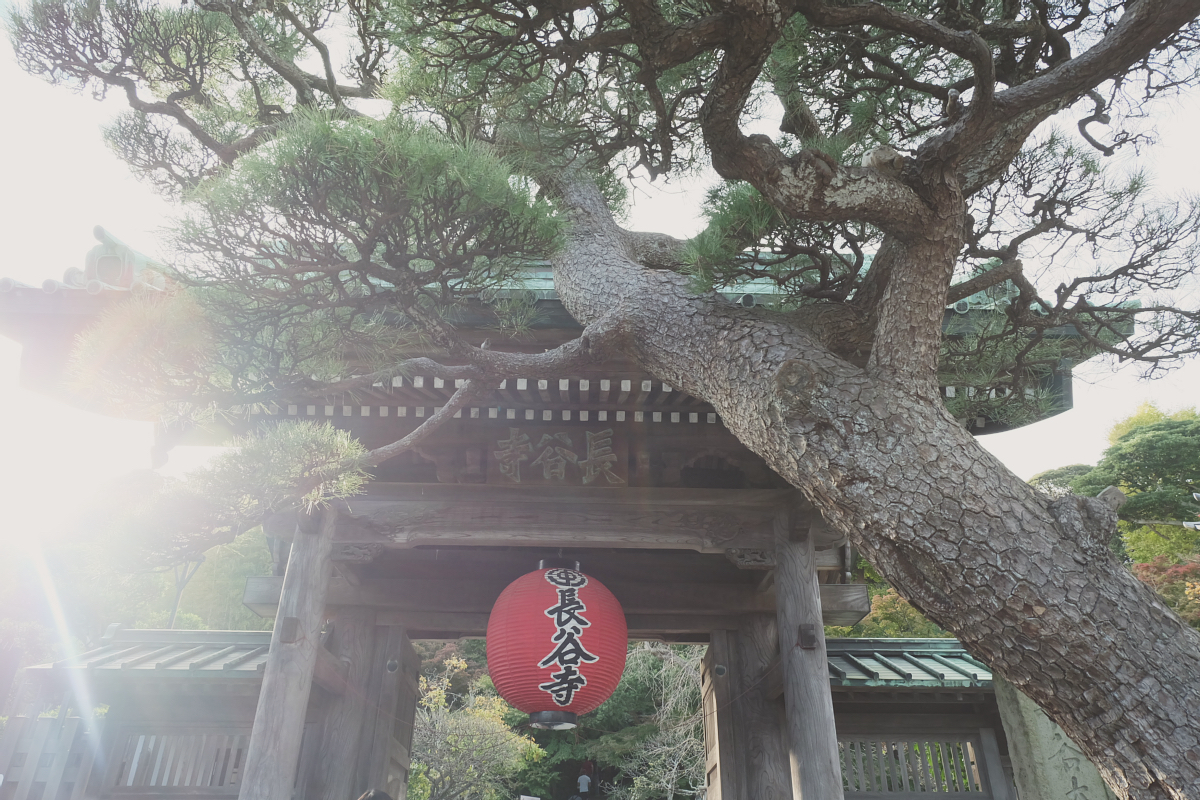 DSCF0518rainbowholic-kamakura-japan
