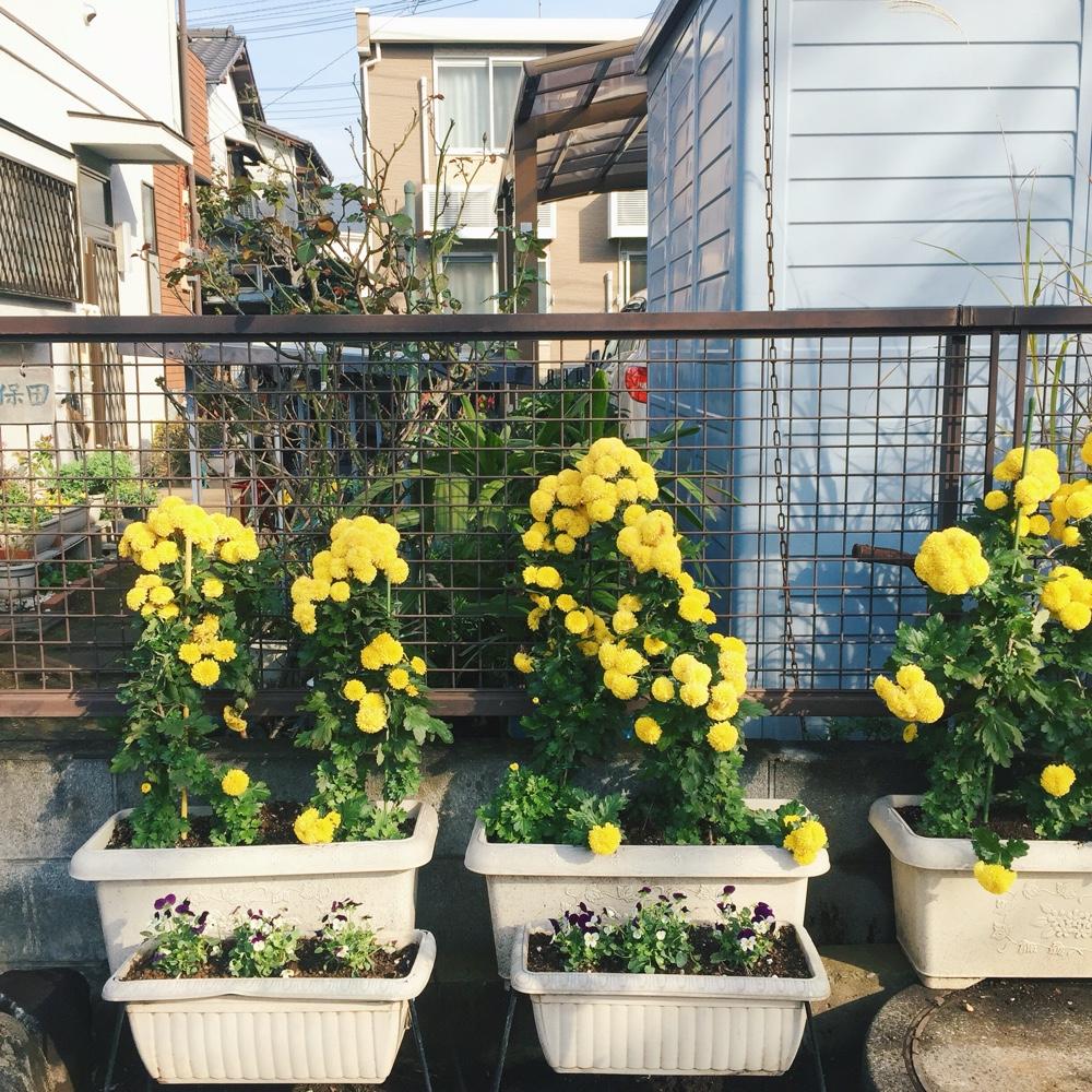flowers-in-japan.jpg