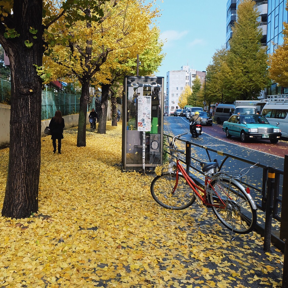 harajuku-gingko-leaves.jpg