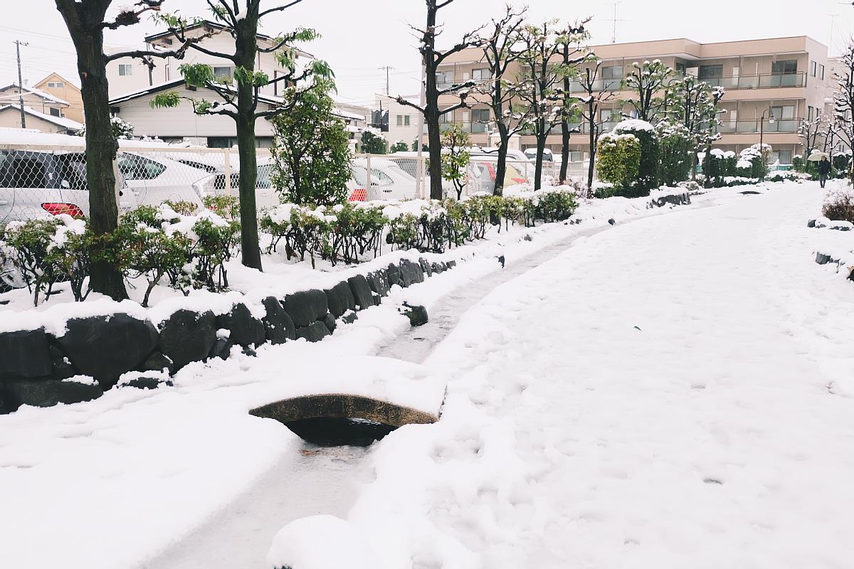 DSCF4065 saitama snow 2016 winter
