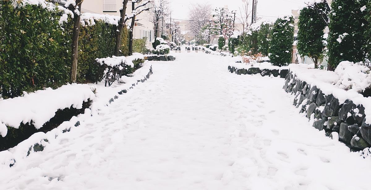 DSCF4066 saitama snow 2016 winter