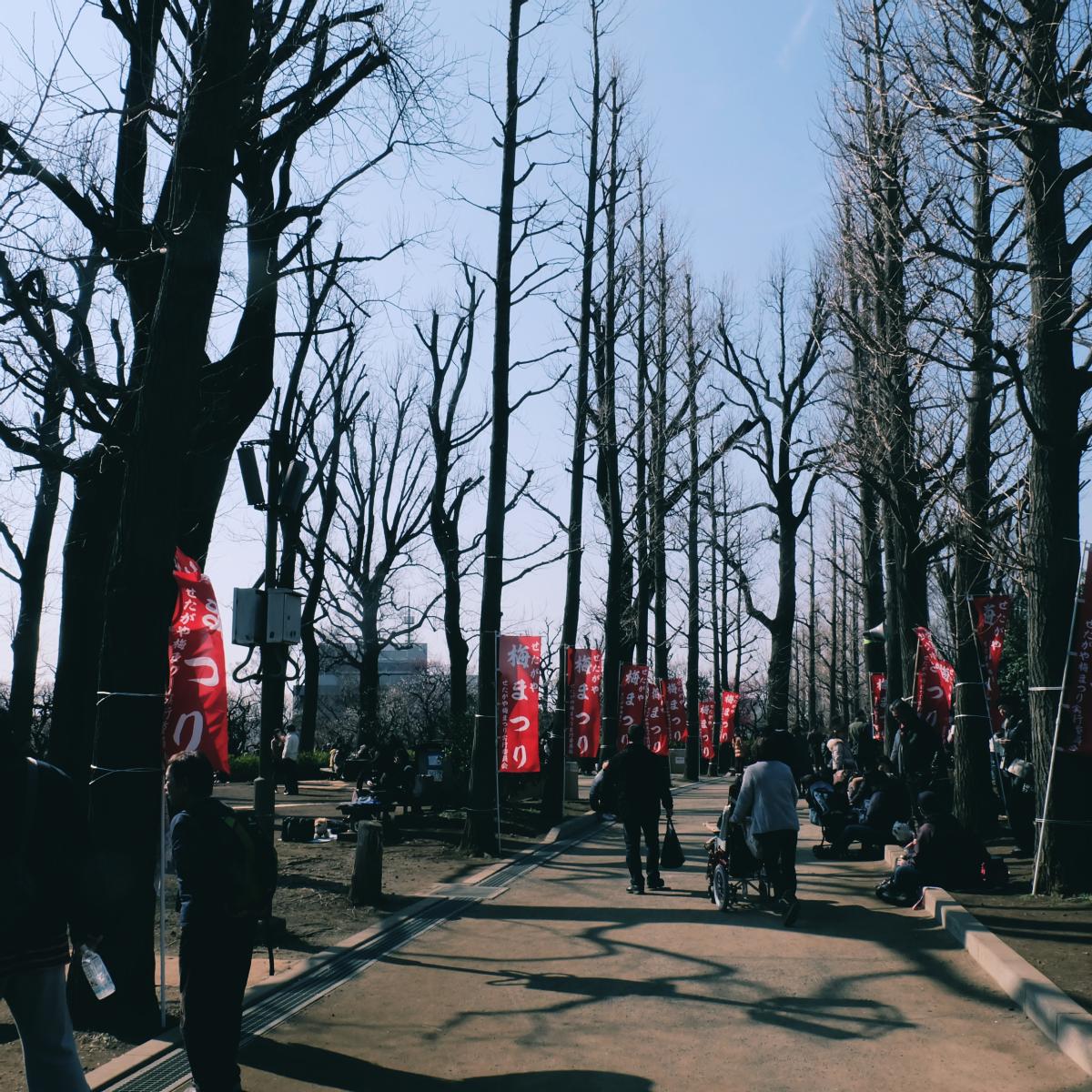 tokyo plum blossom viewing ume shimokitazawa 2