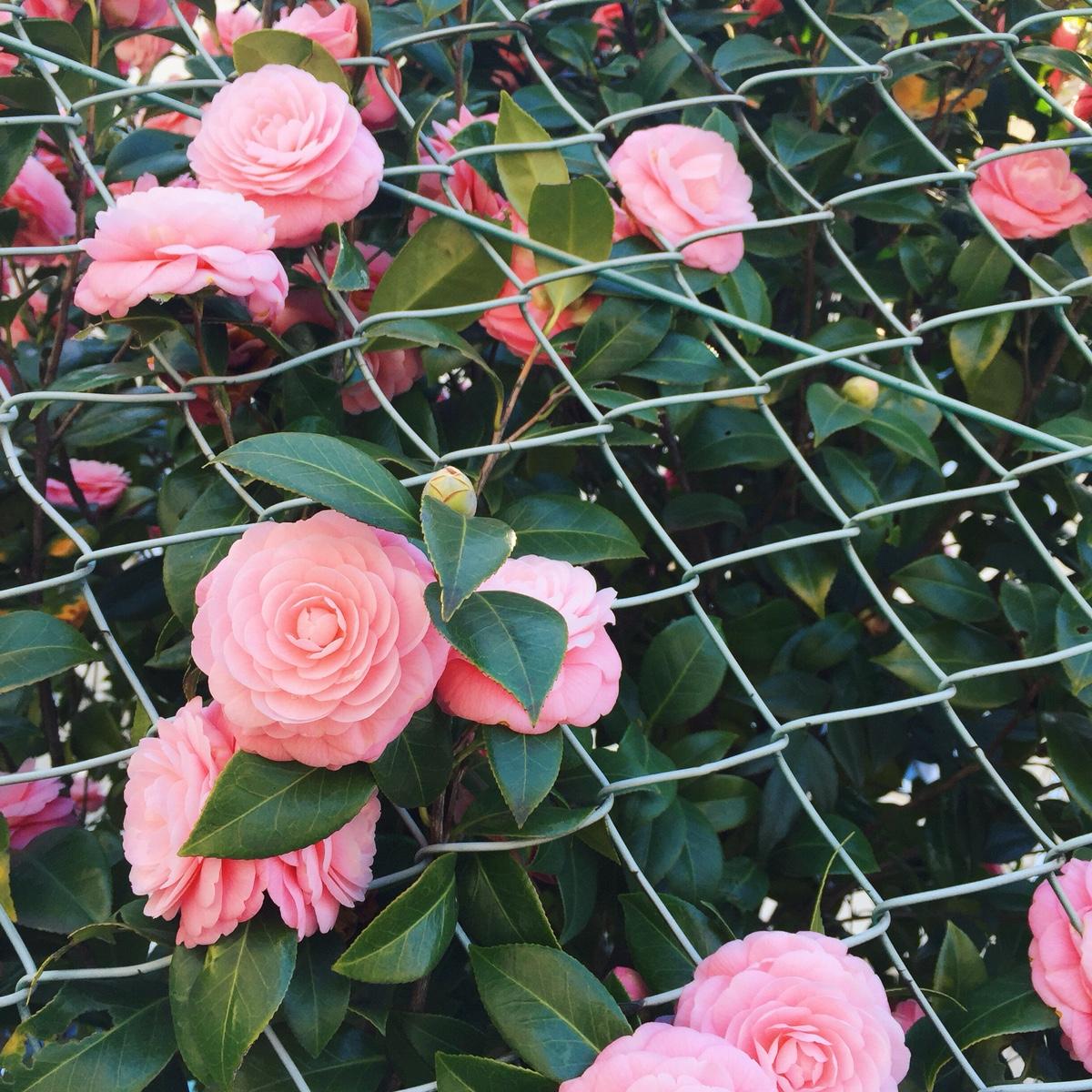 pretty-flowers-japan.jpg