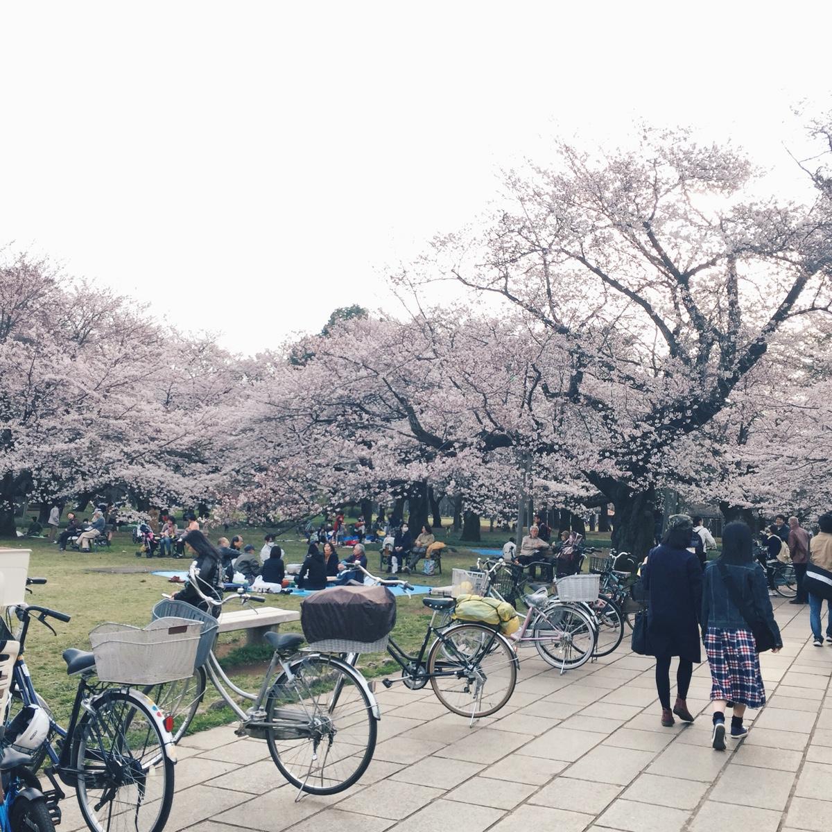 sakura-koganei-park.jpg