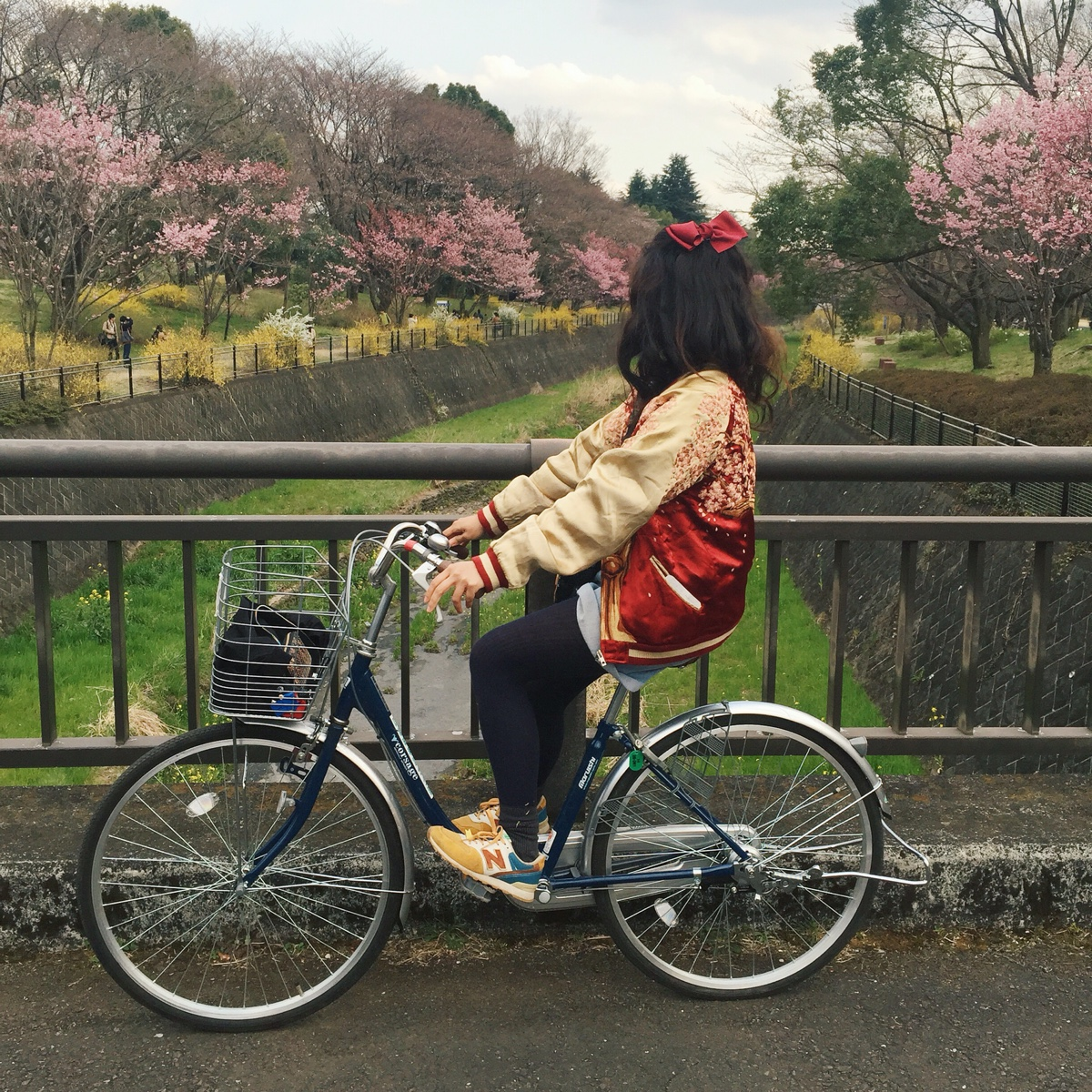showa-kinen-park-sakura.jpg