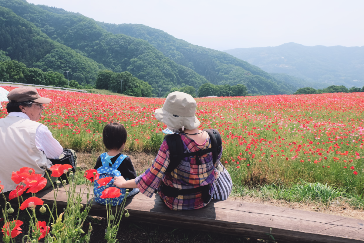 DSCF4696 chichibu poppy flowers 2016 saitama