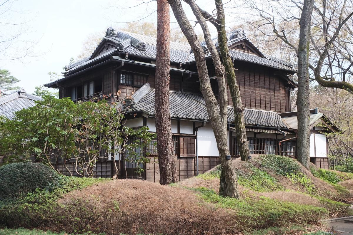 Edo Tokyo Museum Cherry Blossoms 4
