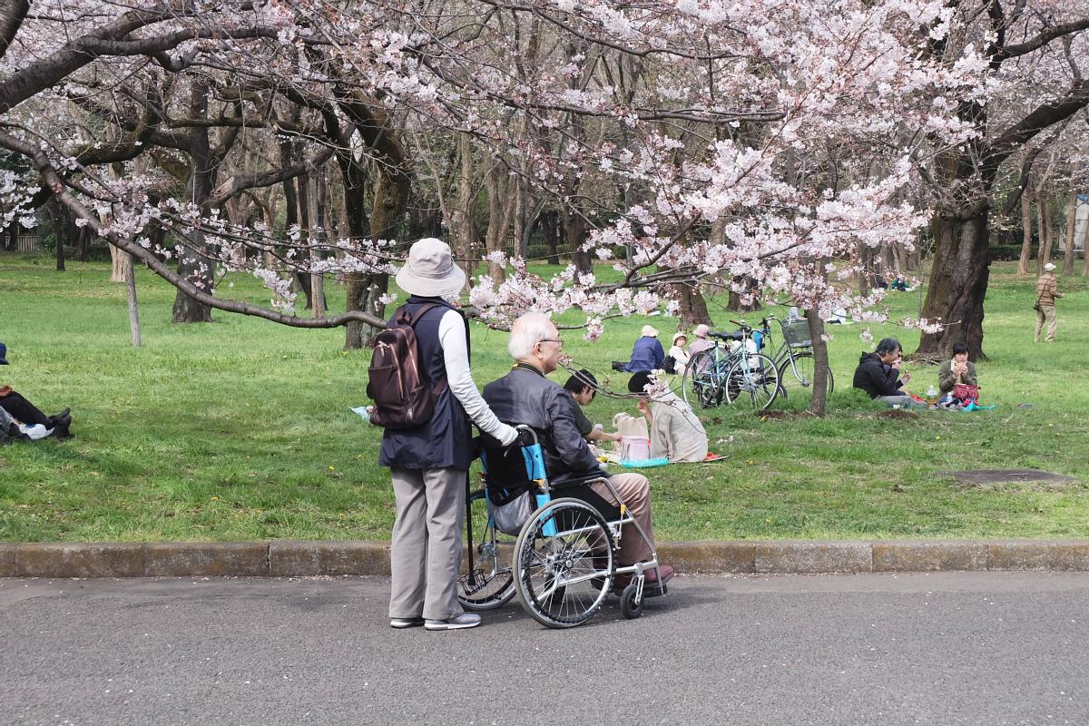 Edo Tokyo Museum Cherry Blossoms 68