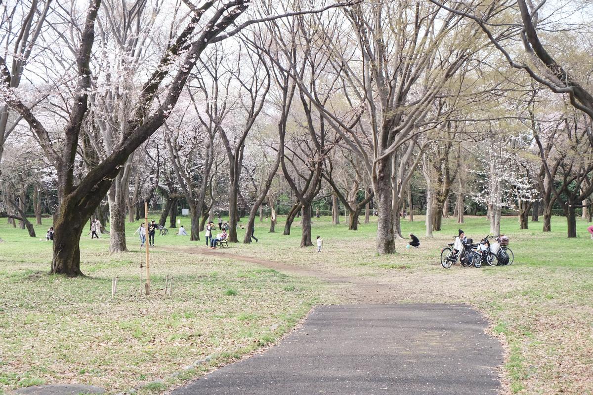 Edo Tokyo Museum Cherry Blossoms 70
