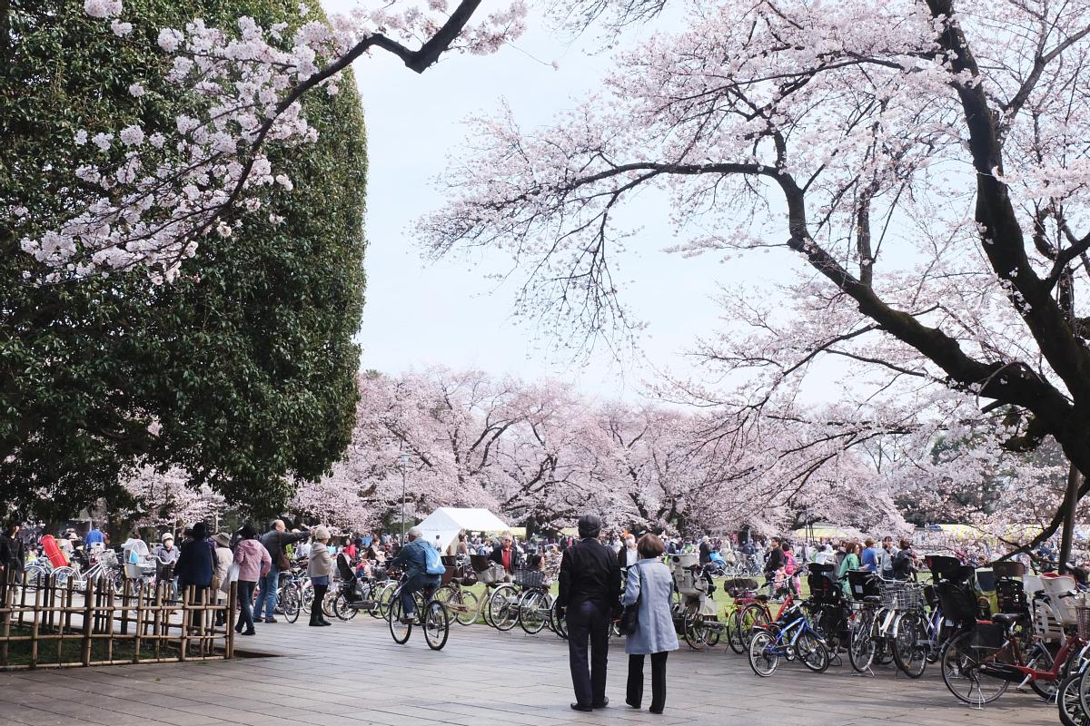 Edo Tokyo Museum Cherry Blossoms 75