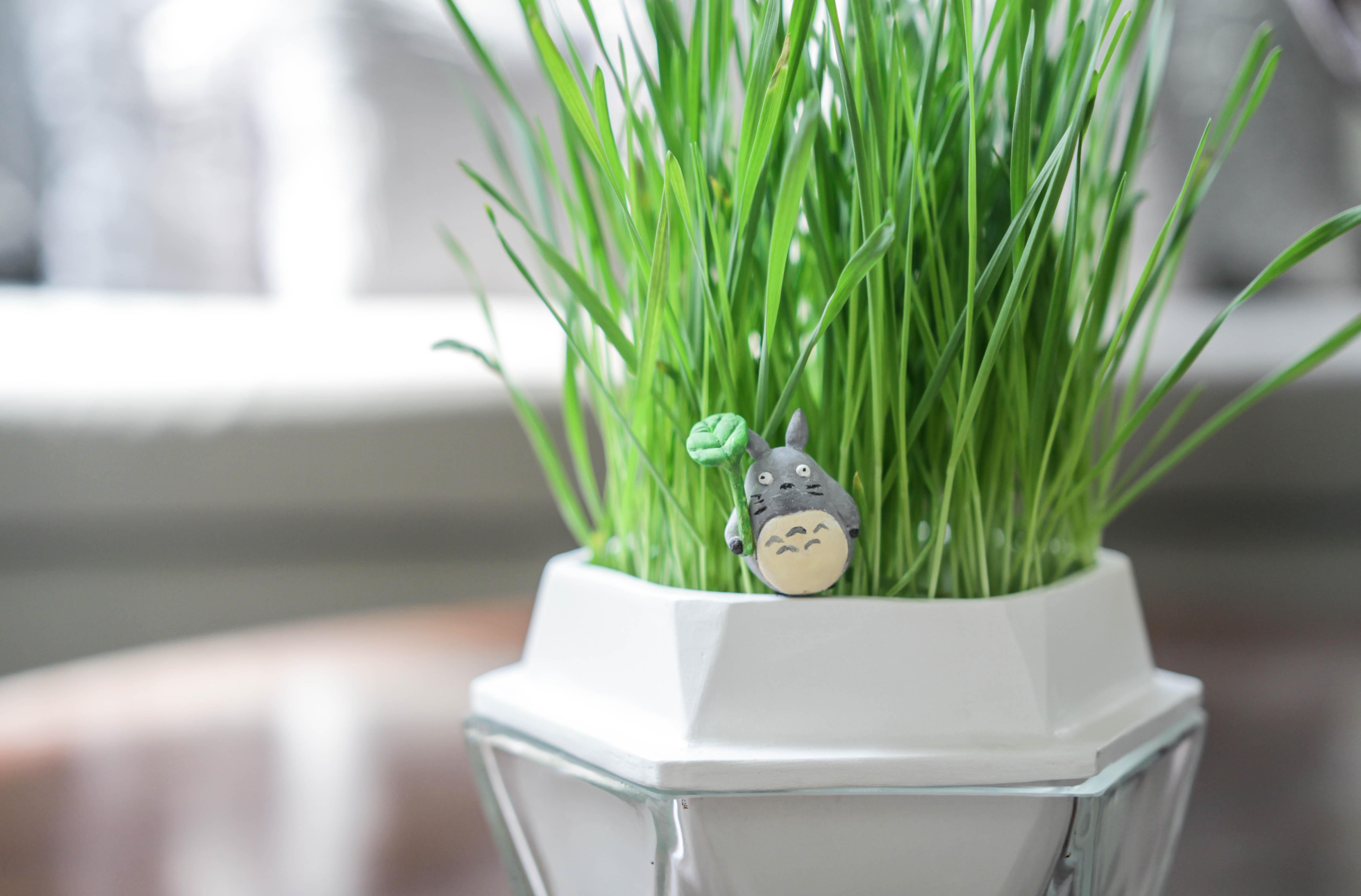 2 Totoro Grass