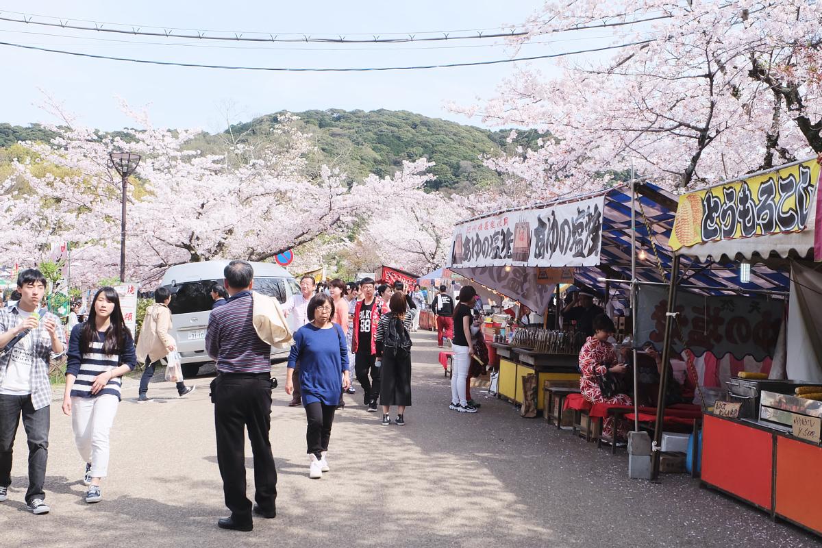 DSCF0966 kyoto sakura cherry blossoms spring 2016