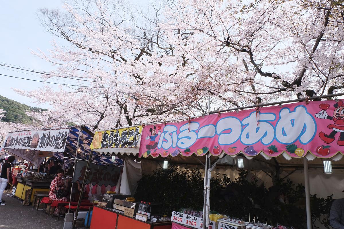 DSCF0967 kyoto sakura cherry blossoms spring 2016