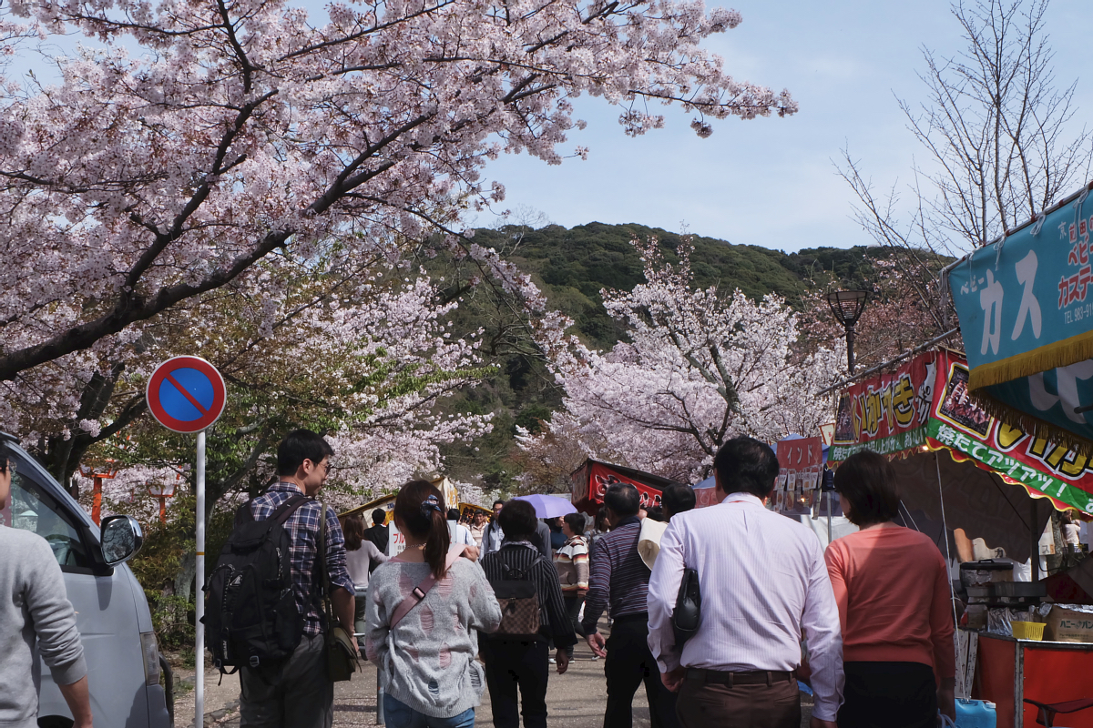DSCF0969 kyoto sakura cherry blossoms spring 2016