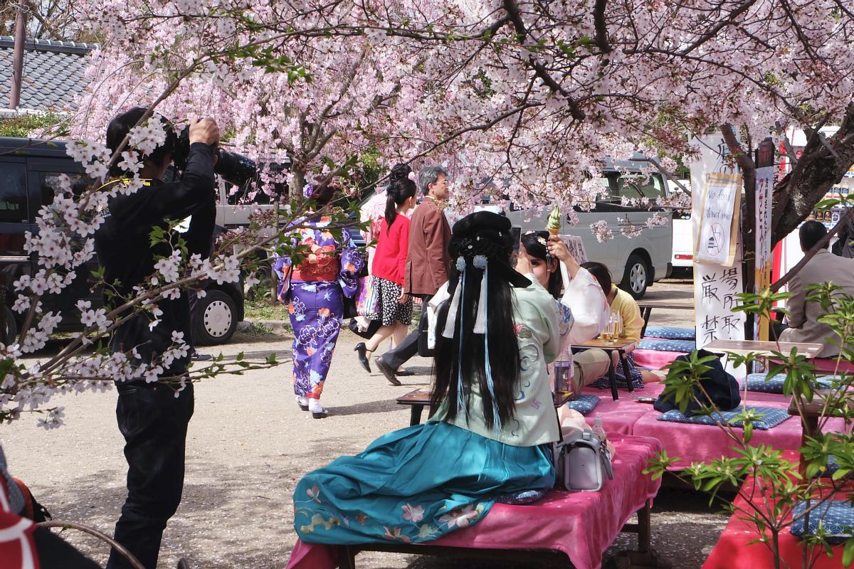 DSCF0971 kyoto sakura cherry blossoms spring 2016