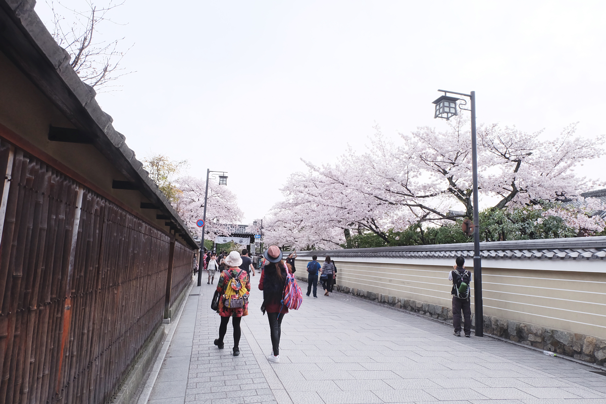 DSCF0987 kyoto sakura cherry blossoms spring 2016