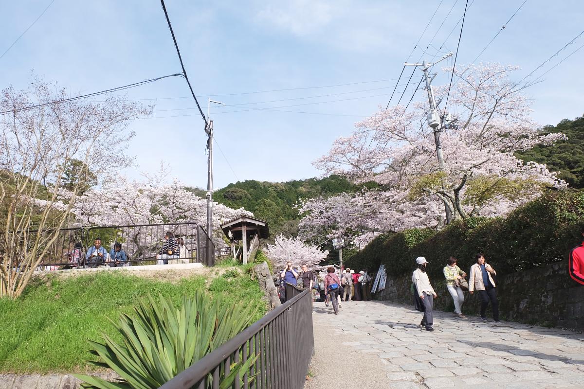 DSCF1002 kyoto sakura cherry blossoms spring 2016