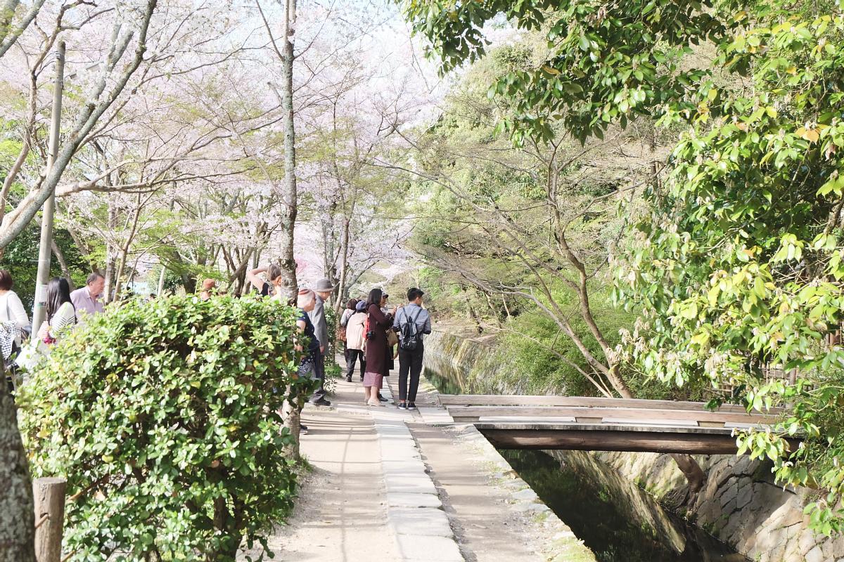 DSCF1005 kyoto sakura cherry blossoms spring 2016