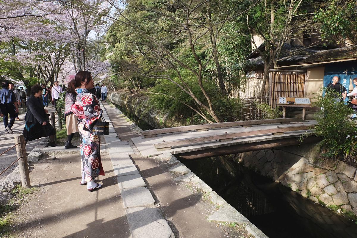 DSCF1006 kyoto sakura cherry blossoms spring 2016