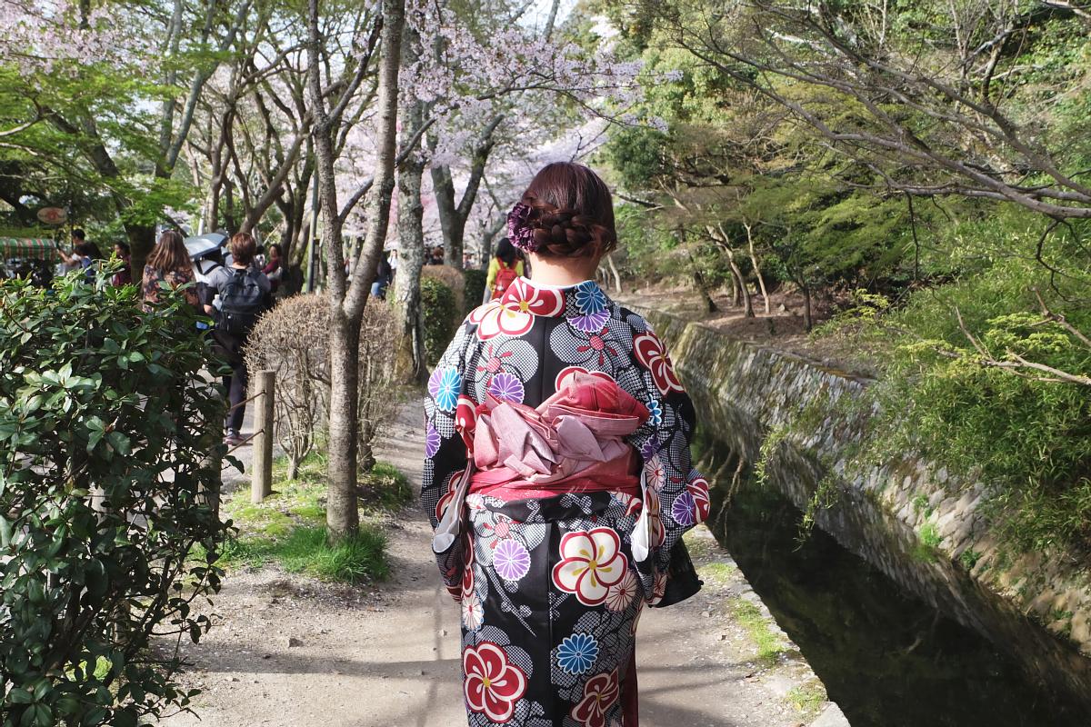 DSCF1010 kyoto sakura cherry blossoms spring 2016
