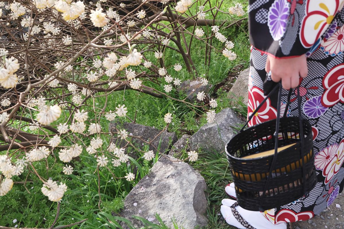 DSCF1021 kyoto sakura cherry blossoms spring 2016