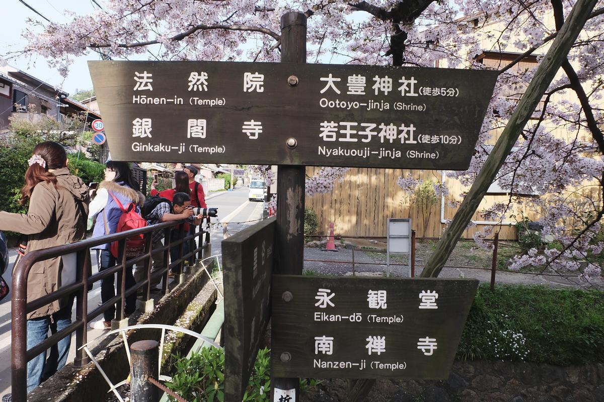 DSCF1032 kyoto sakura cherry blossoms spring 2016