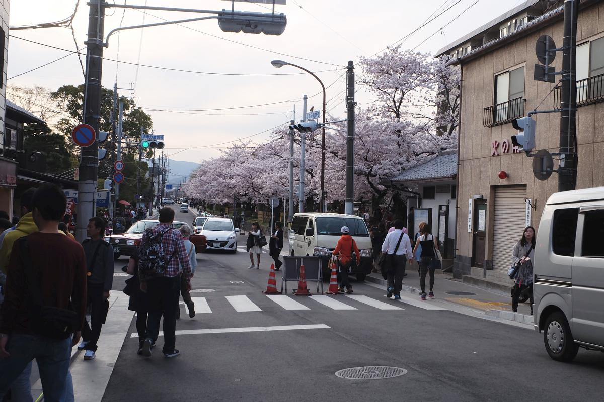 DSCF1052 kyoto sakura cherry blossoms spring 2016