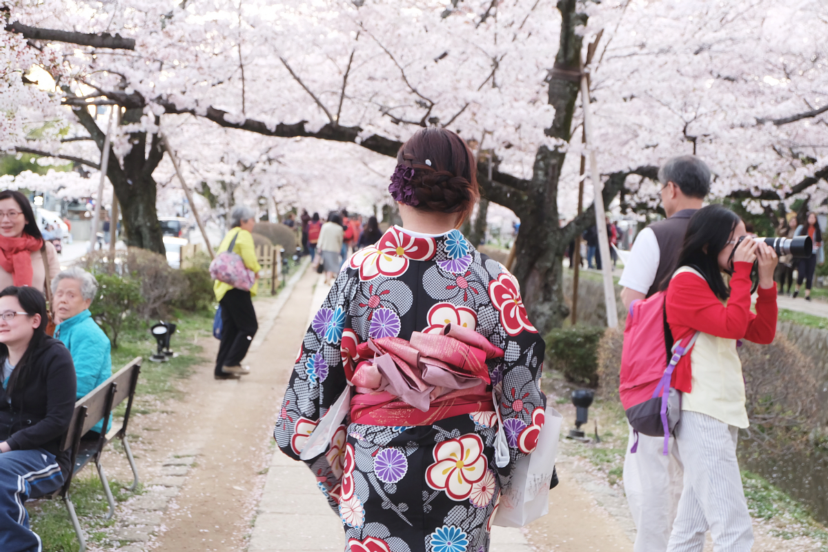DSCF1068 kyoto sakura cherry blossoms spring 2016