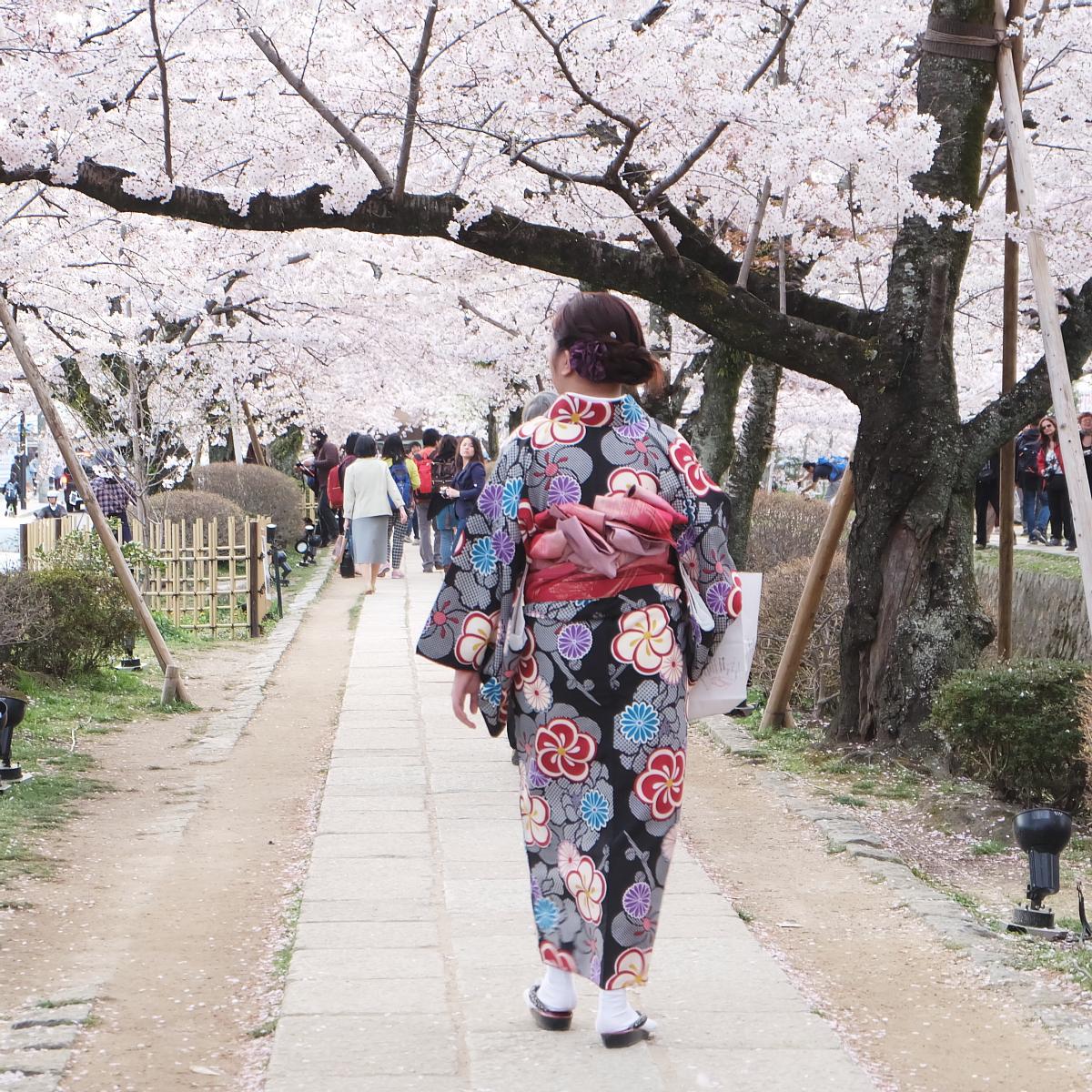 DSCF1070 kyoto sakura cherry blossoms spring 2016
