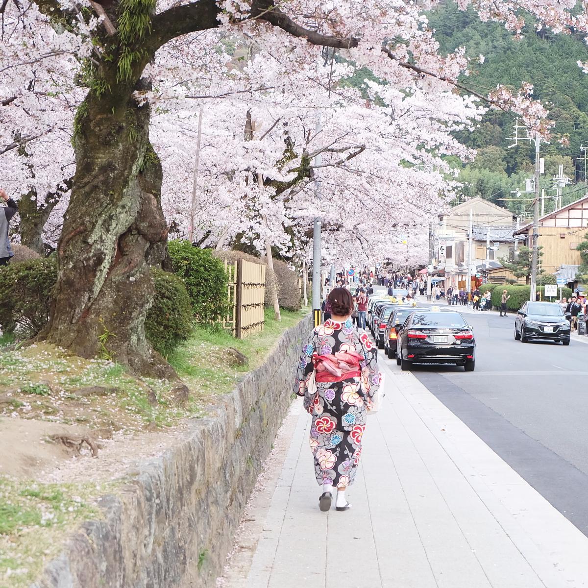 DSCF1084 kyoto sakura cherry blossoms spring 2016