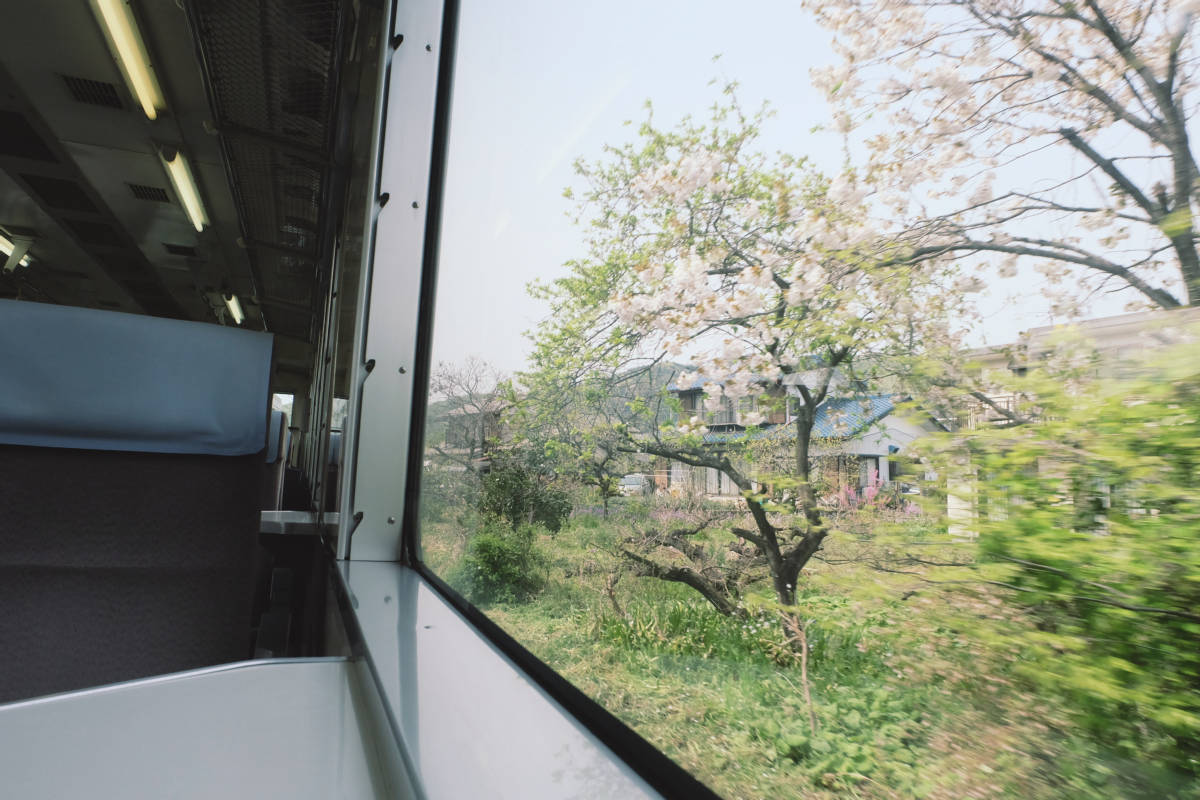 DSCF2047 hitsujiyama park shibazakura chichibu saitama