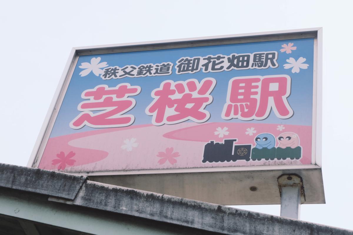 DSCF2057 hitsujiyama park shibazakura chichibu saitama