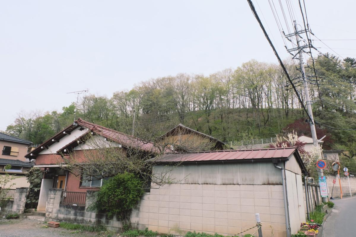 DSCF2066 hitsujiyama park shibazakura chichibu saitama