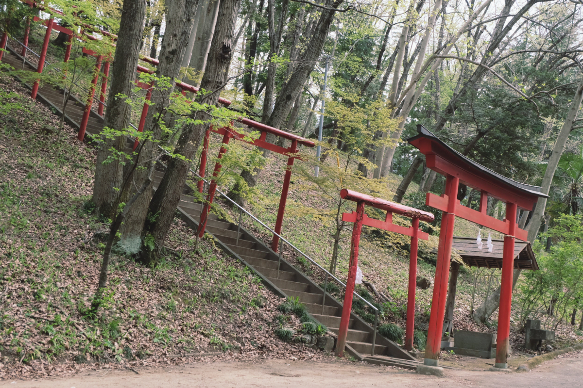 DSCF2077 hitsujiyama park shibazakura chichibu saitama