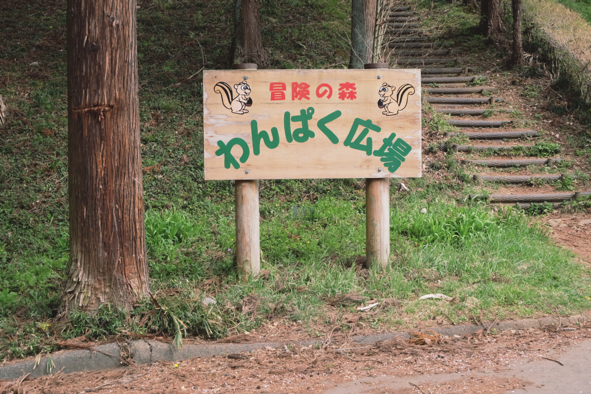 DSCF2080 hitsujiyama park shibazakura chichibu saitama