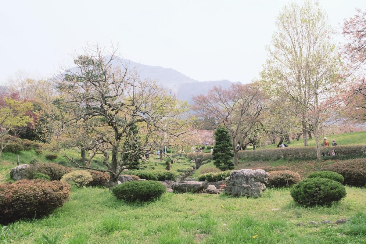 DSCF2082 hitsujiyama park shibazakura chichibu saitama