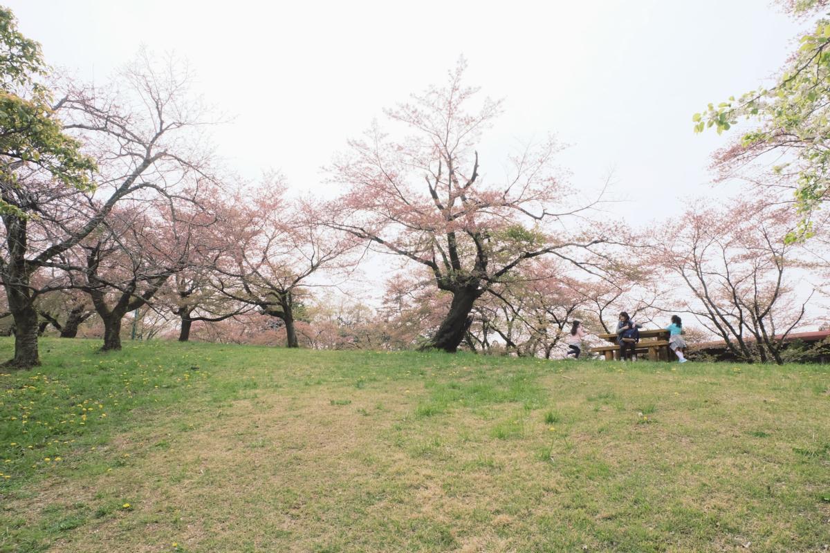 DSCF2084 hitsujiyama park shibazakura chichibu saitama