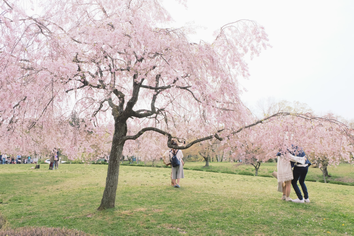 DSCF2085 hitsujiyama park shibazakura chichibu saitama
