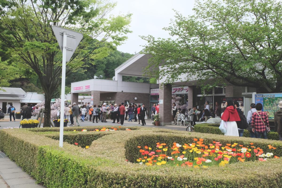 DSCF2775 wisteria ashikaga park