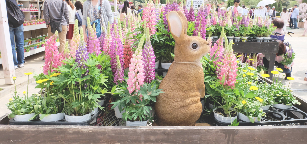 DSCF2777 wisteria ashikaga park
