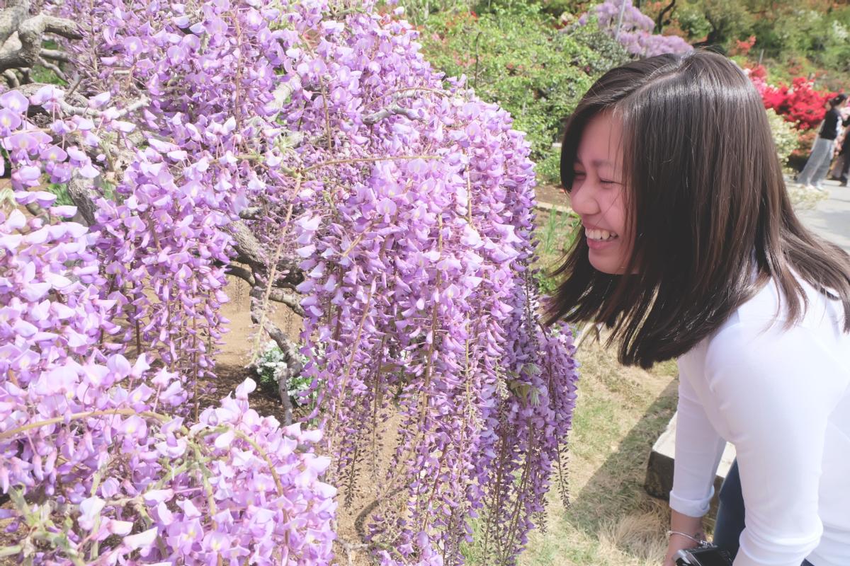 DSCF2821 wisteria ashikaga park