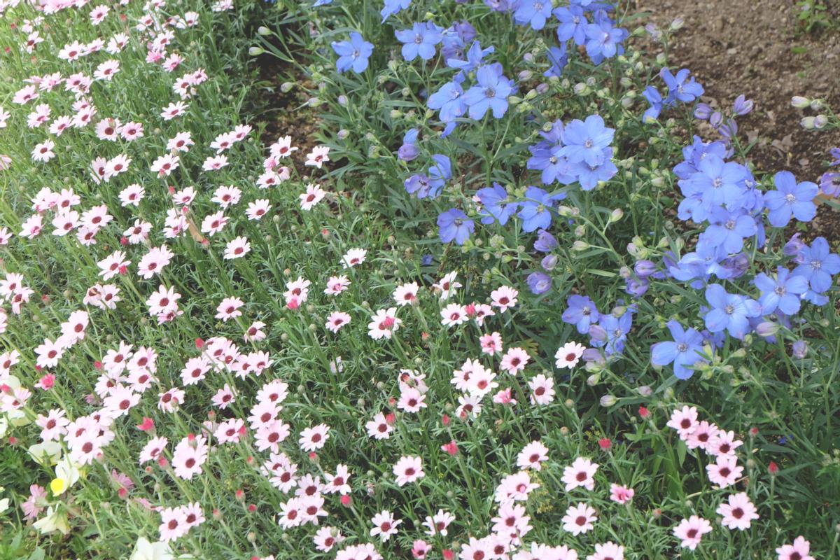 DSCF2828 wisteria ashikaga park