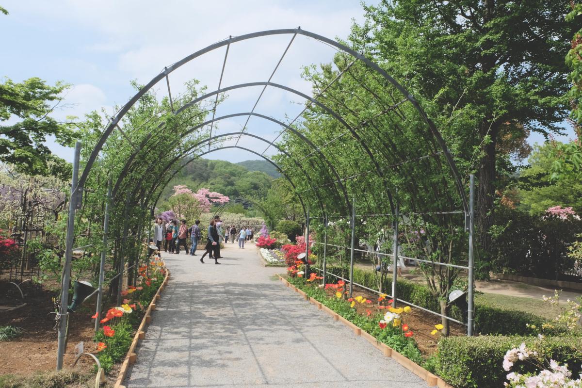 DSCF2829 wisteria ashikaga park