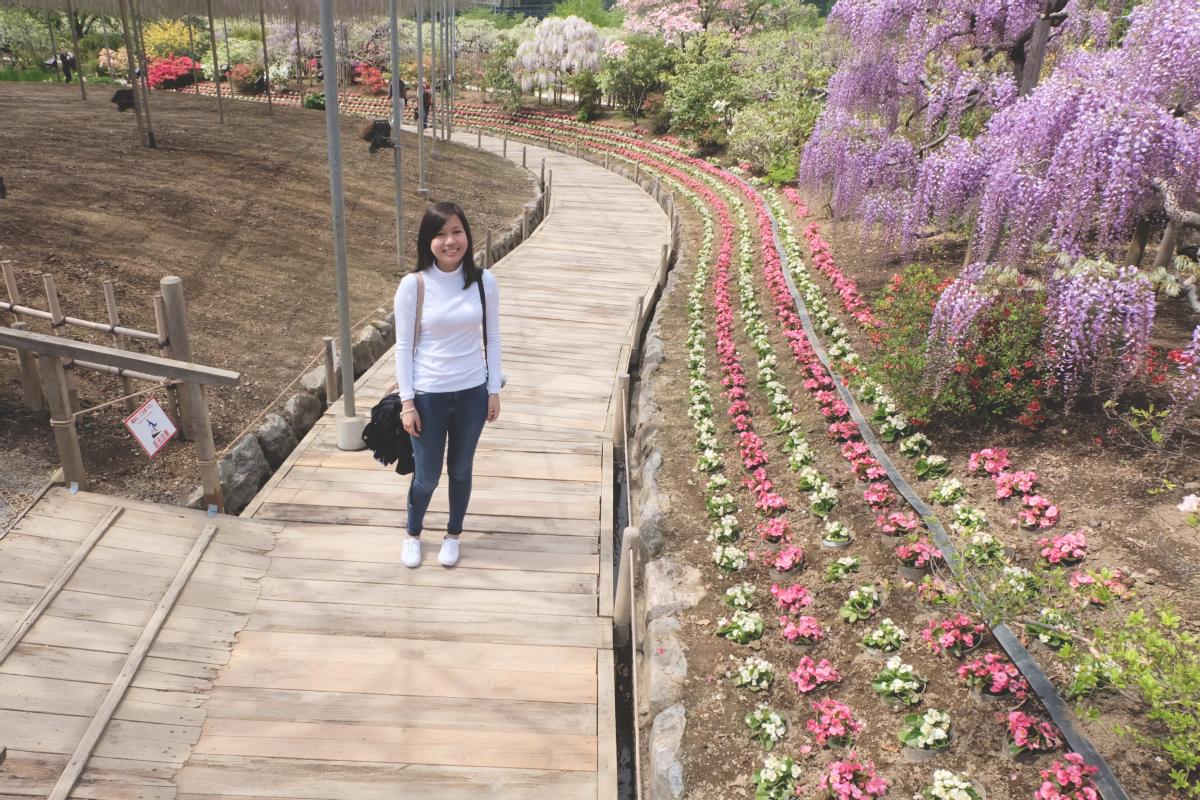 DSCF2844 wisteria ashikaga park
